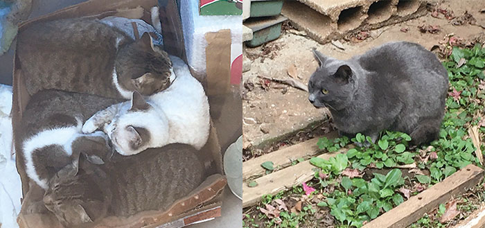 マザー,ルーフ,福岡,保護猫,子猫,病気,風邪,入院
