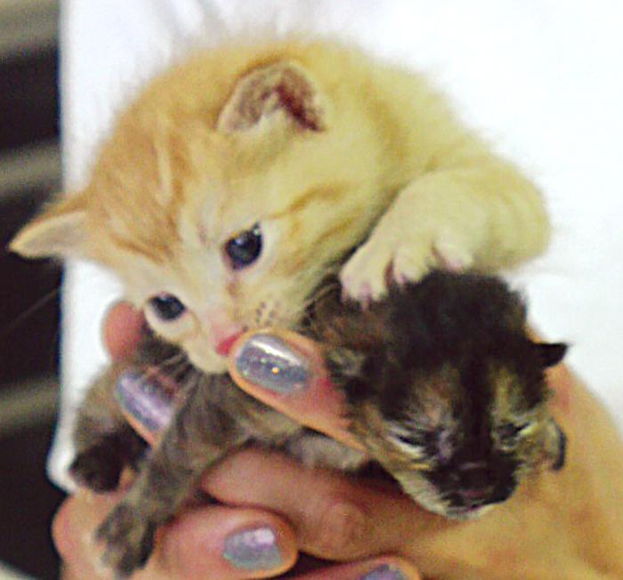 エッセイ,編集長,徒然,保護,猫,赤ちゃん,チビ猫