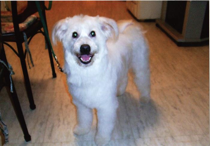 マザー,ルーフ,福岡,保護犬,セラピー,ミックス犬,トレーニング