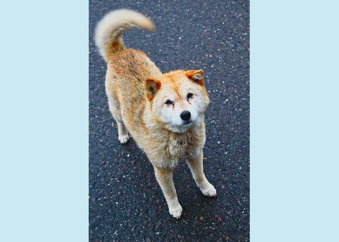 マザー,ルーフ,保護,犬,猫,福岡,公園