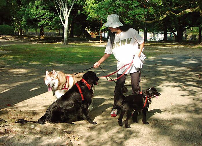 エッセイ,編集長,徒然,犬,中型犬,散歩,大型犬,多頭飼い