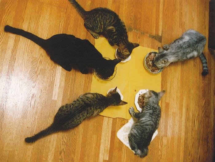 マザー,ルーフ,福岡,保護猫,里親,募集,保護