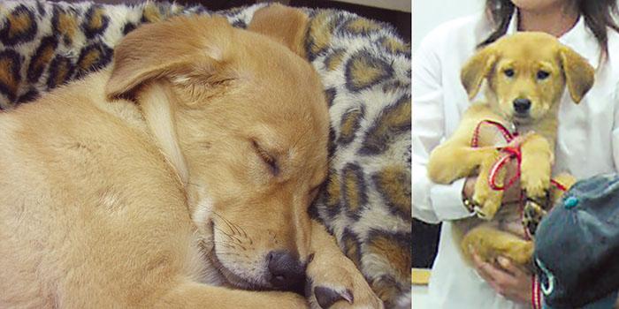 マザー,ルーフ,福岡,日向,保護犬,セラピードッグ,訓練,可愛い