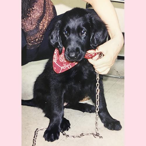 メリールー子犬