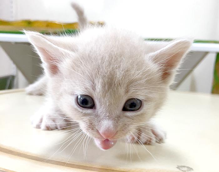 マザー,ルーフ,福岡,里親,子猫,保護猫,決定