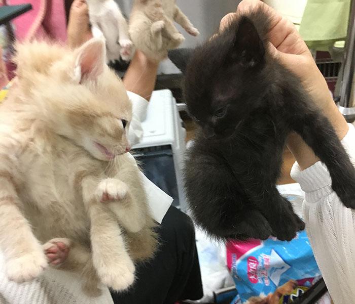 マザー,ルーフ,赤ちゃん猫,保護猫,成長,里親募集,福岡