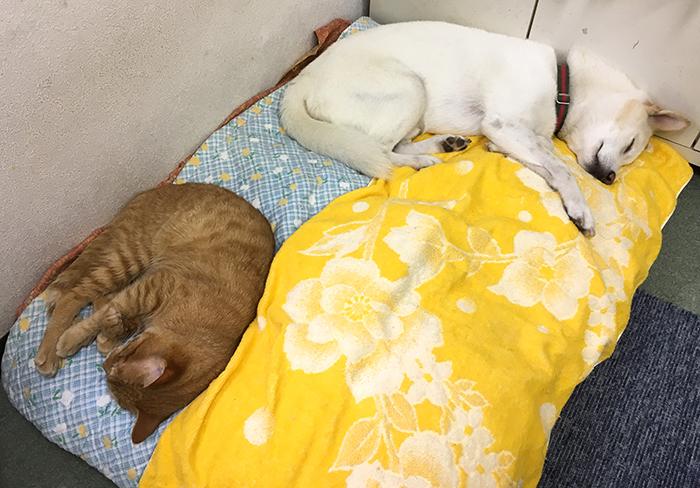 マザー,ルーフ,仲良し,陸,北斗,保護猫,スキップ