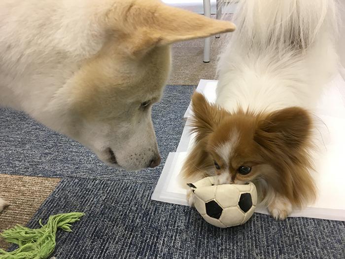W杯,サッカー,日本,コロンビア,負けられない,マザー,ワールドカップ
