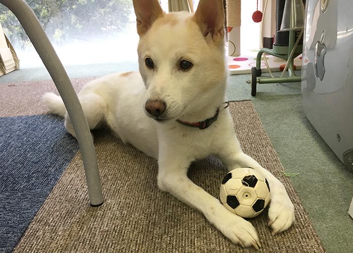 スキップ,サッカー,W杯,北斗,犬猫