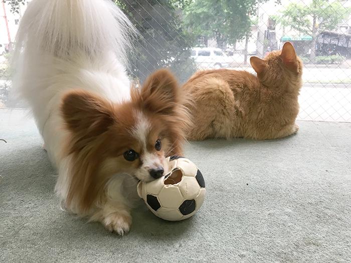 ピーチ,スキップ,サッカー,W杯,日本,決勝トーナメント,ベルギーマザー,ルーフ