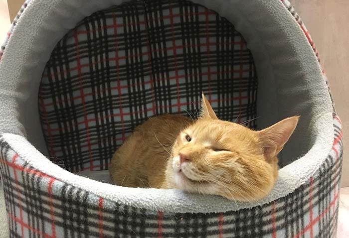 保護猫,陸,寝る,休日,編集部,スキップ