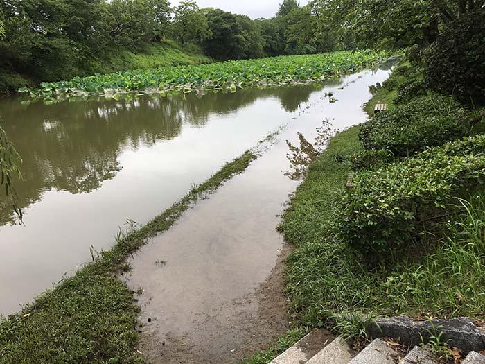 大雨,記録的,お堀,散歩,マザー,ルーフ