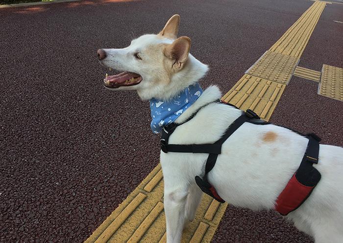 マザー,ルーフ,福岡,散歩,犬,夏,寄付