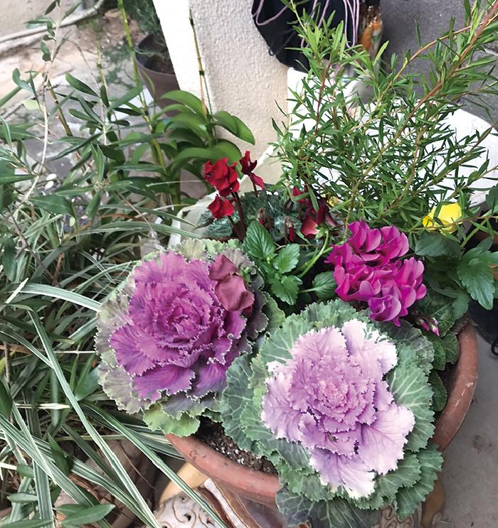 寄せ植え,庭造り,ガーデニング,花,緑,自然