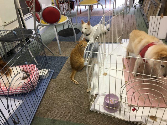 マザー,ルーフ,保護犬,保護猫,福岡,仲良し