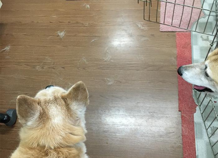 マザー,ルーフ,保護犬,換毛期,コーム,毛,福岡
