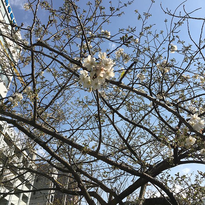 マザー,ルーフ,お散歩,保護犬,福岡,桜,太陽