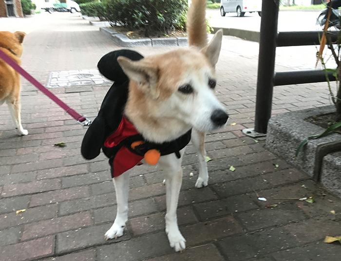 今日の犬猫,福岡,保護犬,ハロウィン,ホワイト,太陽,マザー,ルーフ