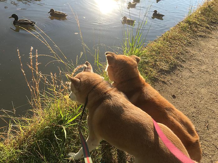 今日の犬猫,マザー,ルーフ,福岡,保護犬,保護猫,お散歩,秋