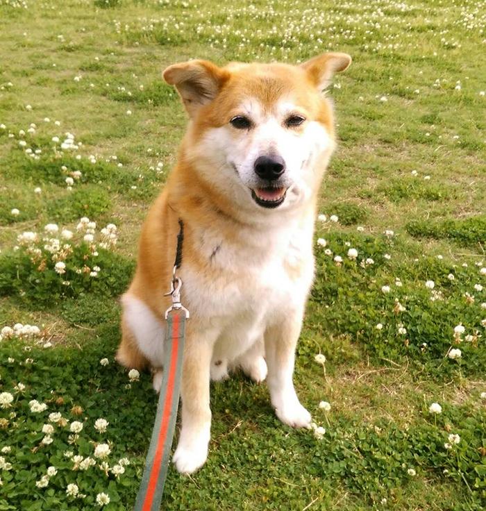 今日の犬猫,お散歩,マザー,ルーフ,福岡,保護犬,習性,ハンター