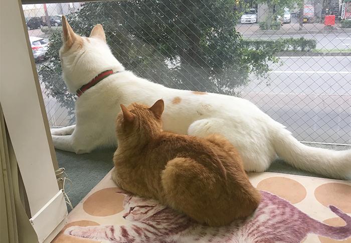 今日の犬猫,マザー,ルーフ,福岡,保護犬,保護猫,ひなたぼっこ,仲良し