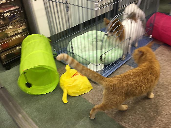 今日の犬猫,マザー,ルーフ,福岡,保護猫,保護犬,遊ぶ,陸