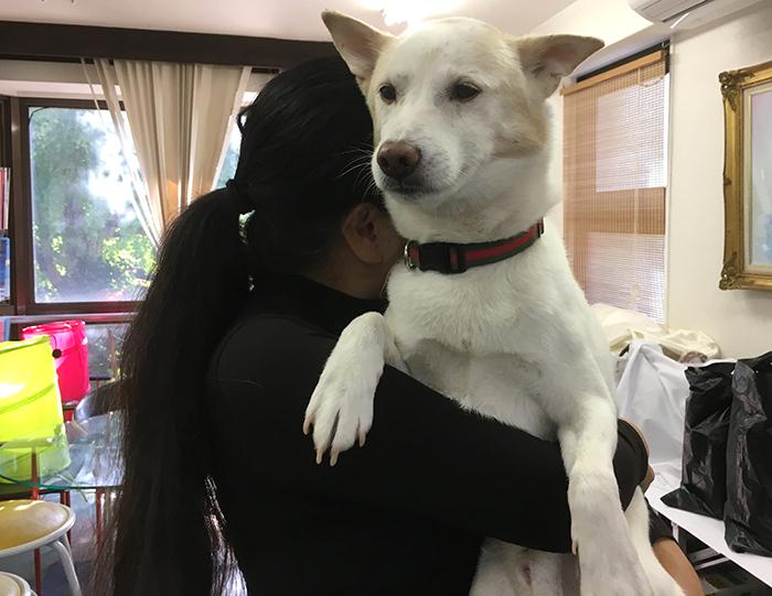 今日の犬猫,マザー,ルーフ,福岡,保護犬,癒し,ボス,北斗