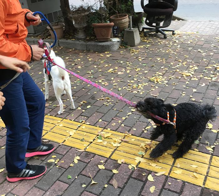 今日の犬猫,マザー,ルーフ,保護,犬,福岡,お散歩