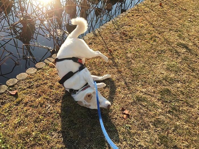 マザー,ルーフ,犬,散歩,秋冬,福岡,保護犬