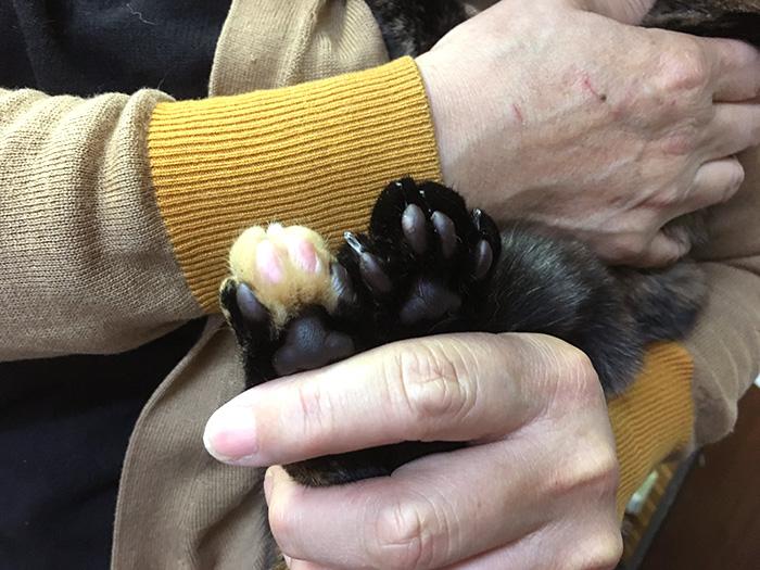 今日の犬猫,マザー,ルーフ,福岡,保護猫,里親,募集