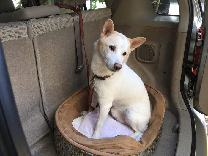 今日の犬猫,マザー,ルーフ,福岡,ドライブ,北斗,保護犬