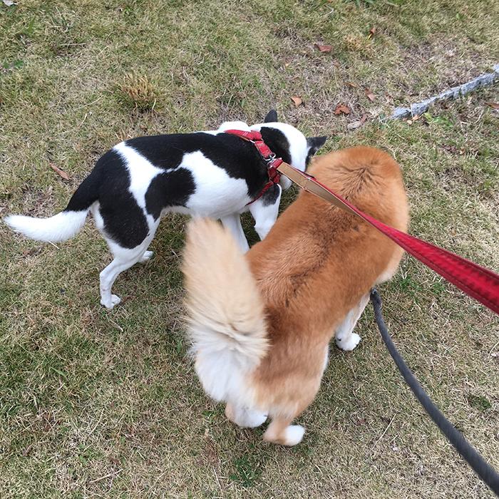 マザー,ルーフ,保護,犬,福岡,太陽,お散歩,サキ