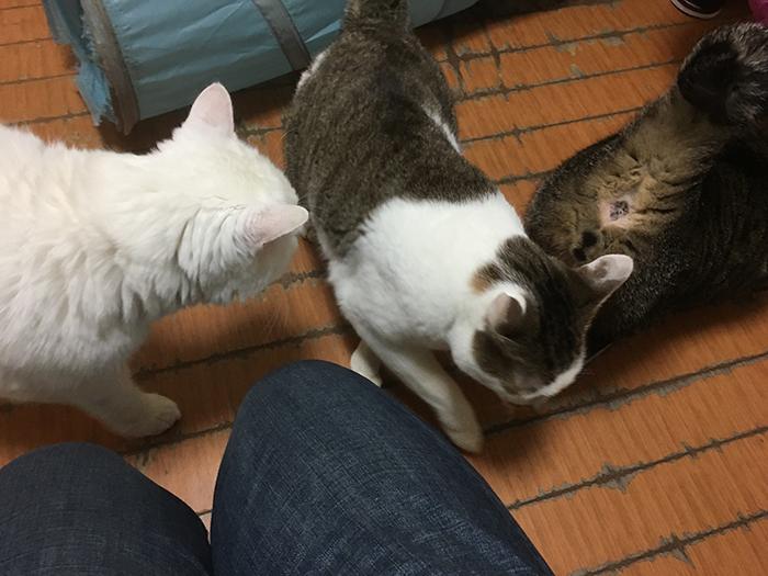 今日の犬猫,マザー,ルーフ,福岡,保護猫,保護犬