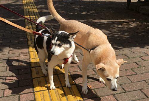 マザー,ルーフ,福岡,保護犬,保護猫,お散歩,写真は苦手