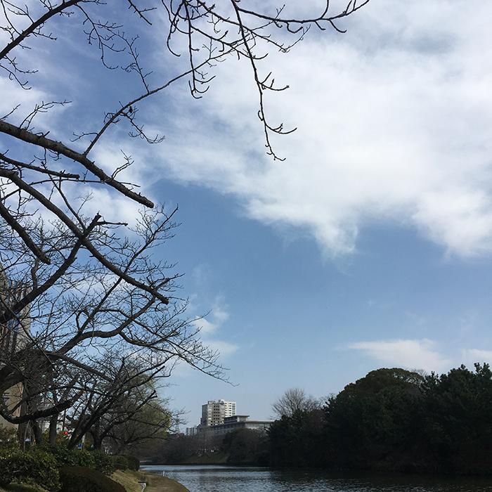 マザー,ルーフ,福岡,保護犬,保護猫,お散歩,アイコンタクト
