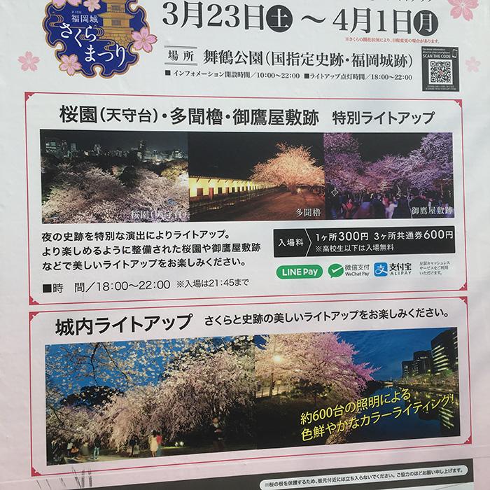 お散歩,桜,さくら祭り,舞鶴公園,お濠端,北斗,マザー,ルーフ,保護犬