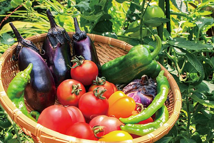 夏,健康,美容,夏野菜,カリウム,水分,ビタミンE,リコピン,トマト