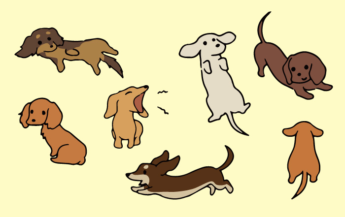マザー,ルーフ,福岡,ミニチュア,ダックスフント,保護犬,里親,ダックス祭り