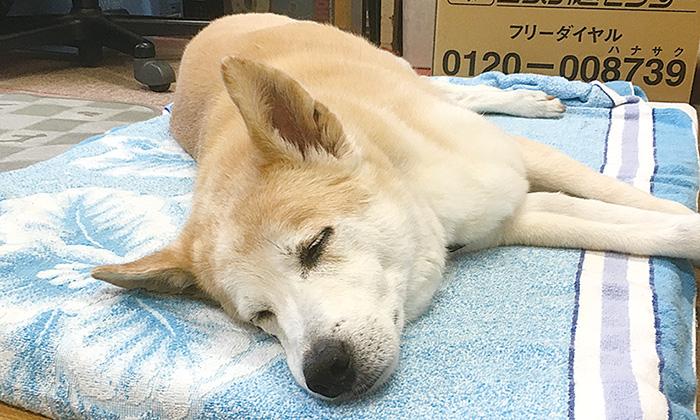 マザー,ルーフ,福岡,引越し,保護犬,保護猫,同居