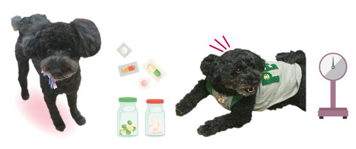 癲癇,てんかん,マザー,ルーフ,福岡,保護犬,薬,ご飯