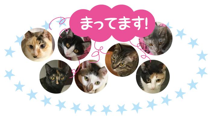 マザー,ルーフ,福岡,保護猫,寄付,キャットプード,引越し