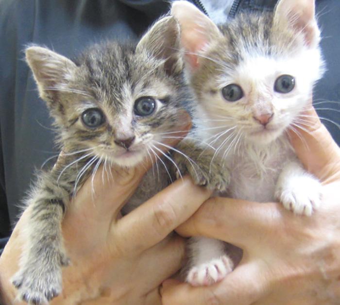 マザー,ルーフ,福岡,里親,猫,保護,寄付