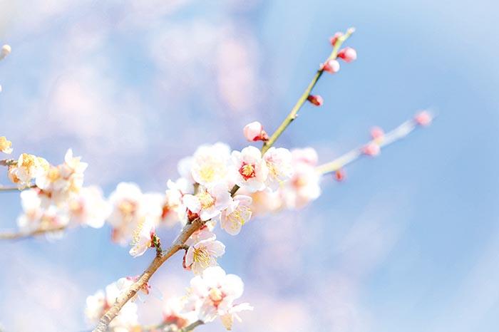 ツバキ,寒緋桜,日本水仙,サザンカ,梅,久留米,宮地嶽神社,のこのしまアイランドパーク,舞鶴公園