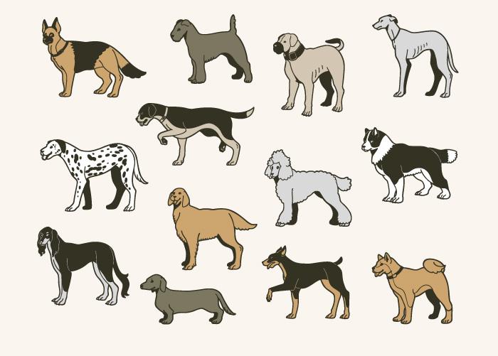 記者,ブログ,ハスキー,大型犬,犬種,特徴,知識,勉強