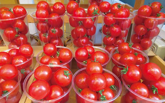 塩トマト,ミニトマト,トースト,バンビ,福岡,薬院,六ツ角