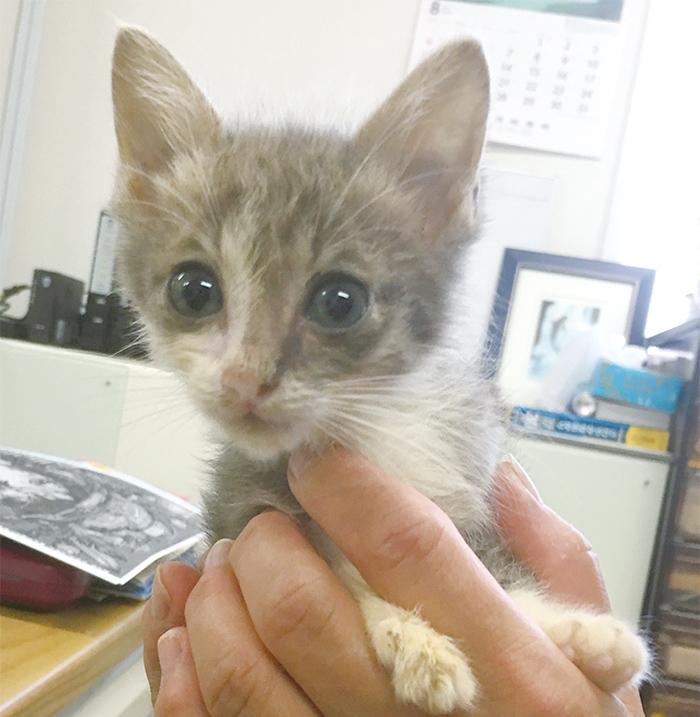マザー,ルーフ,福岡,保護猫,赤ちゃん猫,野良猫,ミルク,里親