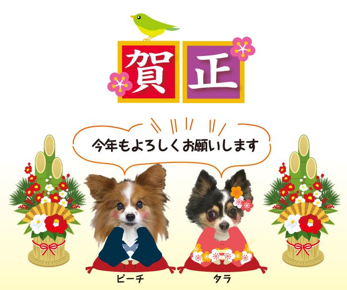 マザー,ルーフ,福岡,謹賀,新年,保護犬,保護犬