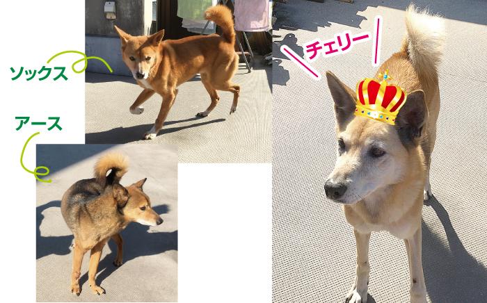 マザー,ルーフ,福岡,保護,野犬,ボランティア,信頼