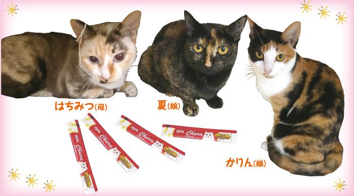 マザー,ルーフ,福岡,保護犬,保護猫,トリミング,トイプードル,ちゅ〜る