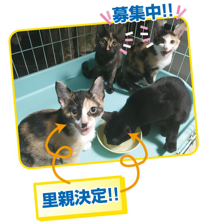 マザー,ルーフ,福岡,保護犬,保護猫,ボランティア,外猫